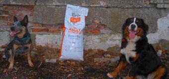 Wyżywienie psów od firmy BRIT